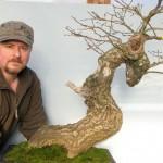Downy Oak
