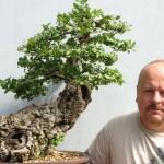 Cork Bark Oak