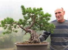 In the Workshop Yamadori Scots Pine image 2