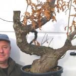 Oak-Quercus pubescens