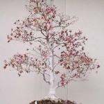 Large Japanese maple