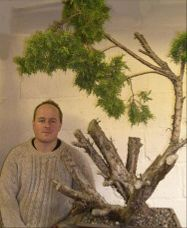 In the Workshop Old Gold Juniper Image 1