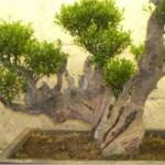 Fei Lian Image 1