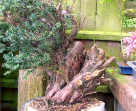 In the Workshop Urban Yamadori Image 3