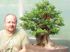 In the Workshop Hawthorn Bonsai Image 3