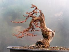 In the Workshop Japanese Larch Image 2
