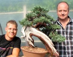 In the Workshop An old Yamadori Juniper Image 3