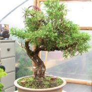 In The Workshop San Jose Juniper Image 1