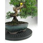 Bonsai Rotating Turntables