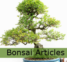 bonsai tree articles and useful information
