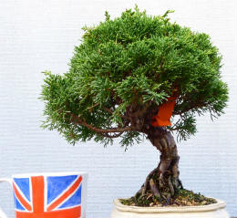 the end product of bonsai tree care information