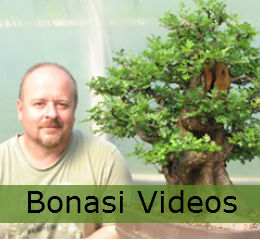 bonsai tree care with videos and guides