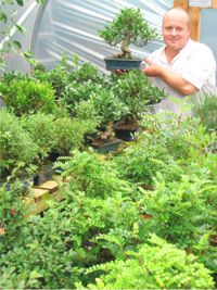 bonsai tree stock