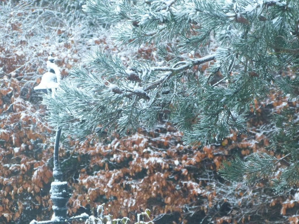 Winter for bonsai can be tough