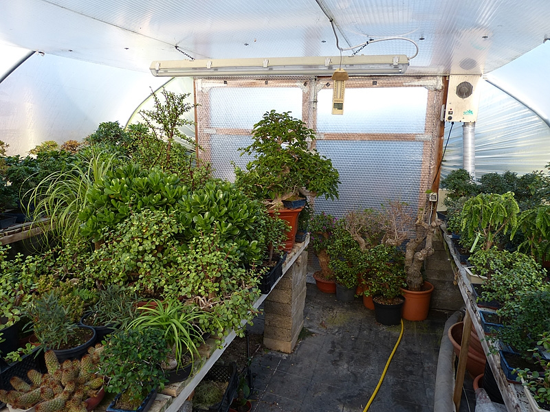 Heated winter quarters for tender bonsai trees