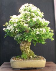bonsai created on an experience day