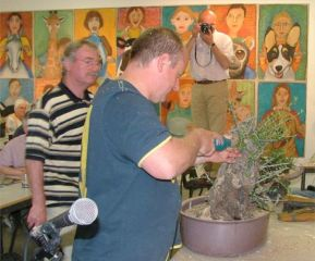 Large bonsai at an experience day with Graham Potter