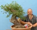 EXCEPTIONAL Portuguese Oak Yamadori Bonsai Material