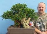 EXCEPTIONAL Privet Bonsai Tree