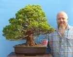 EXCEPTIONAL Japanese Kokonoe White Pine Specimen Bonsai