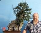Yamadori wild olive bonsai material
