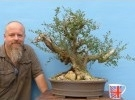 Yamadori Wild Olive Bonsai Tree