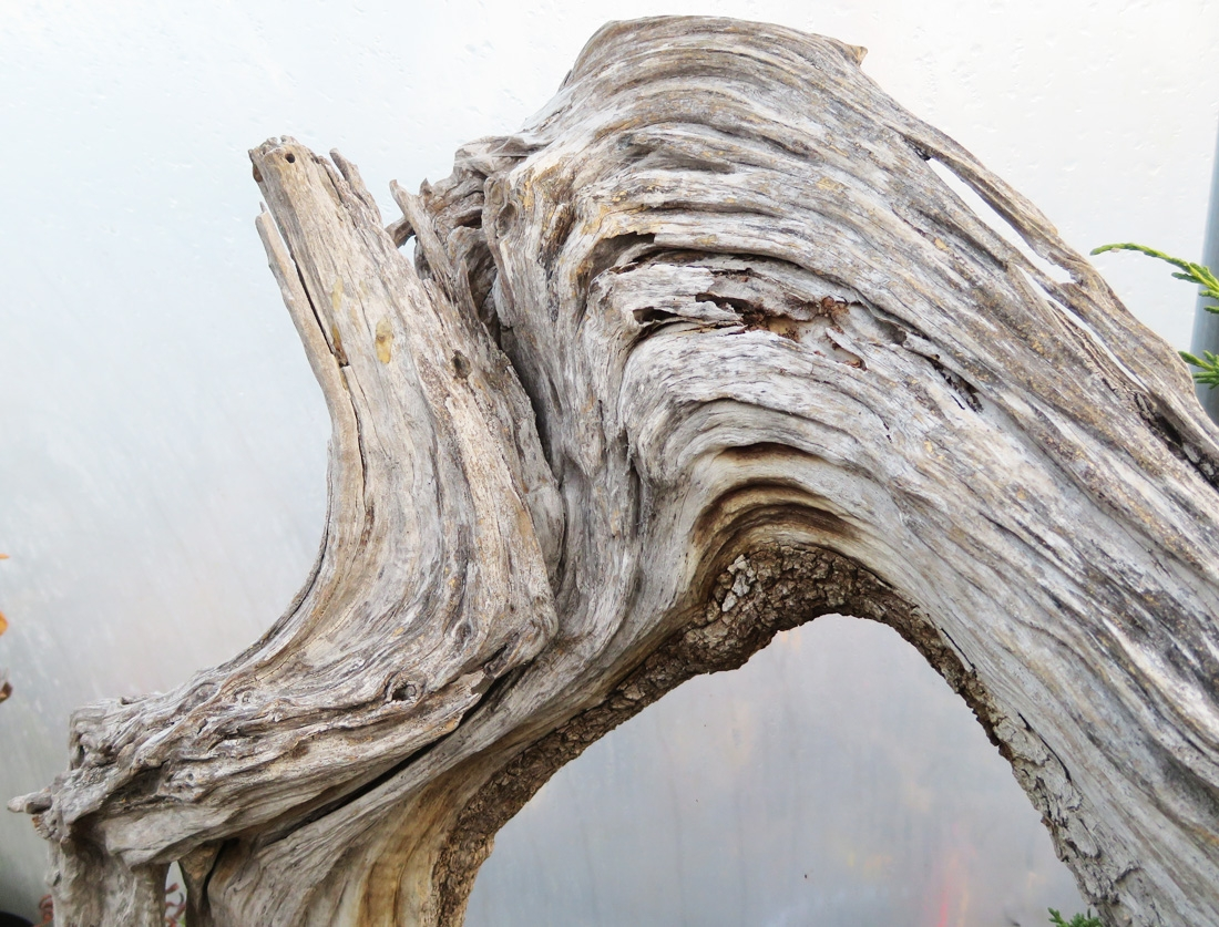Olive deadwood