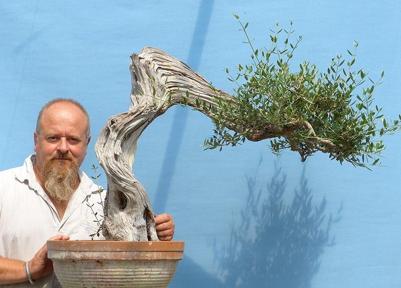 Olive bonsai 2017