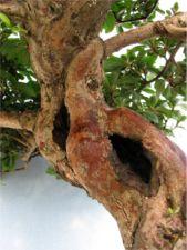 preserving deadwood image 7