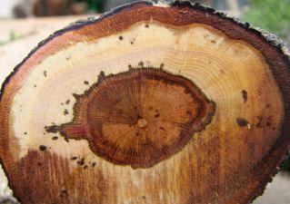 preserving deadwood image 12