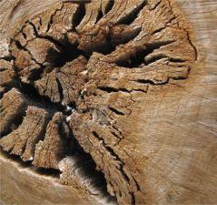preserving deadwood image 13