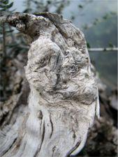 preserving deadwood image 16