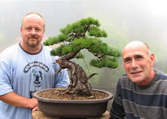 In the Workshop Yamadori Scots Pine