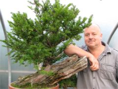 In the Workshop Japanese Yew Image 1