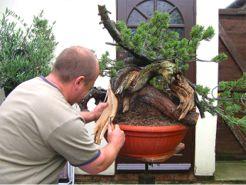 In the Workshop Mugo Pine Image 3