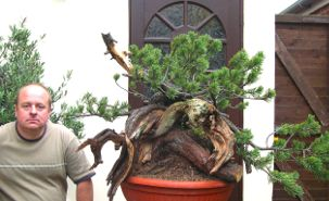 In the Workshop Mugo Pine Image 4