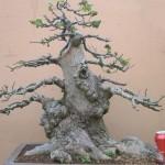 Wytch elm