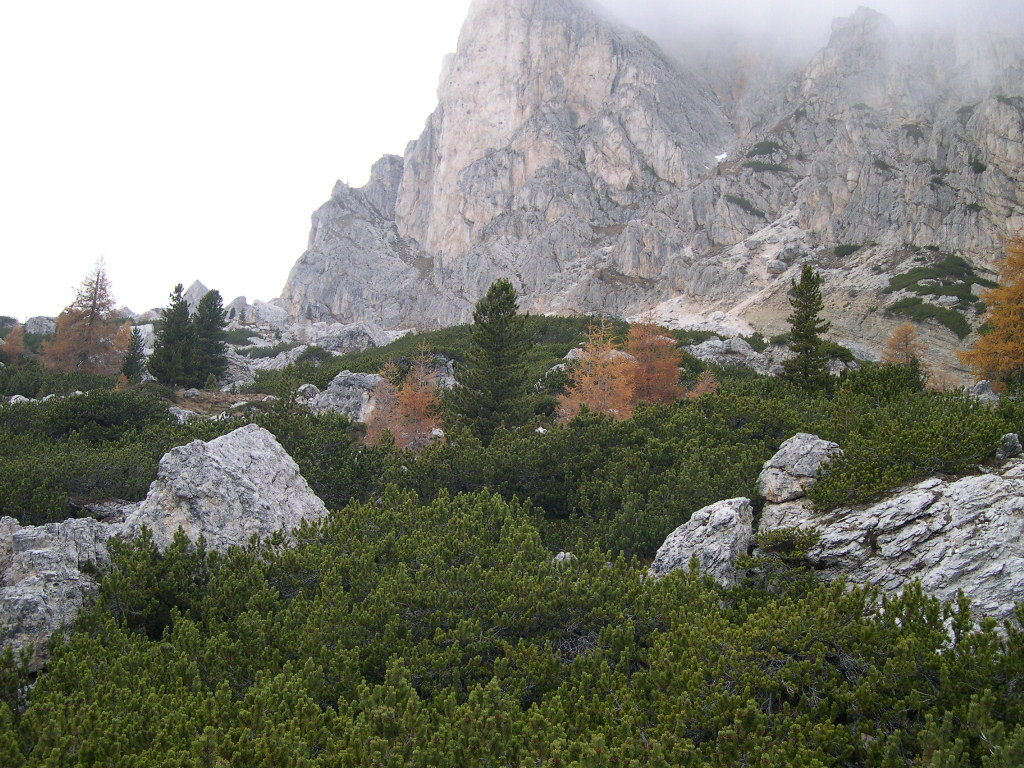 The Italian Alps, the home of mugo pine trees.