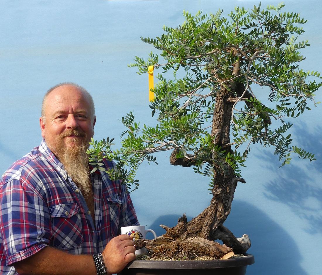 Mediterranean species we use in bonsai.