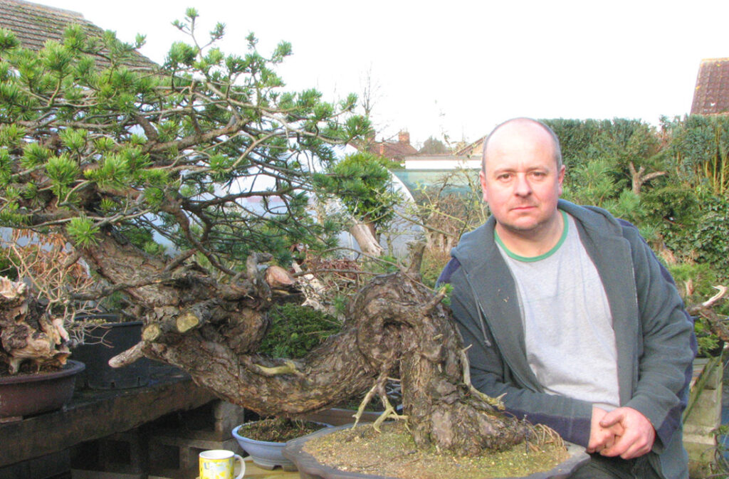 Yamadori scots pine bonsai material comes home.