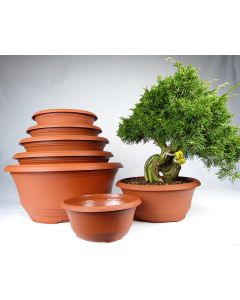 Plastic Pots for Bonsai Nursery Stock