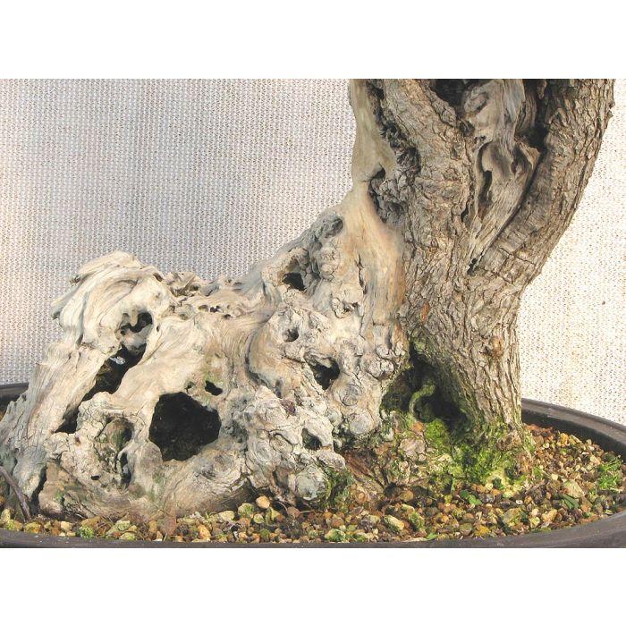 Lime Sulphur Bonsai Jin Whitener Deadwood Preserver