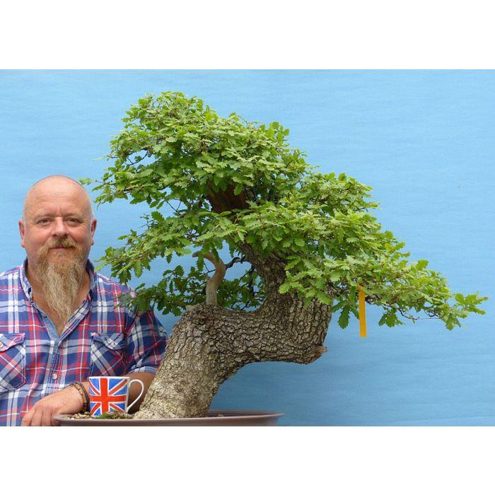 Portuguese Oak Yamadori Bonsai Tree