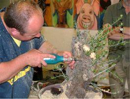 Carving demonstration - Bonsai Association Belgium