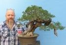 Yamadori Olive Bonsai Tree