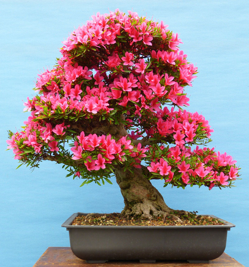 Bonsai in Summer