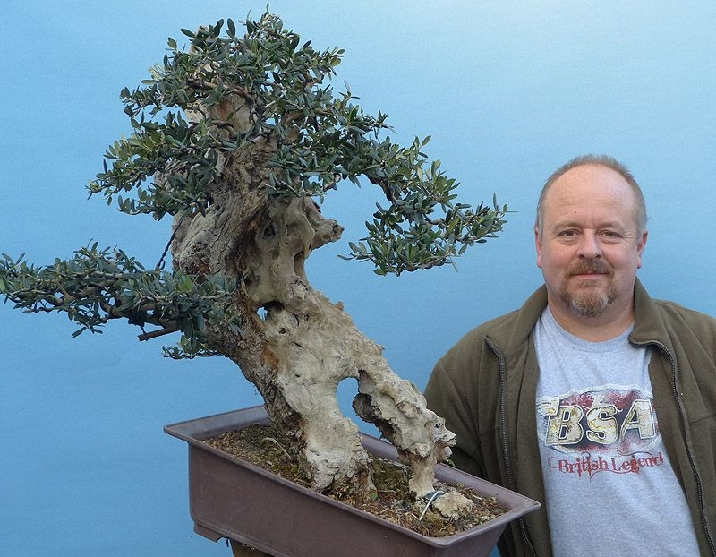 The Olive Tree As Bonsai