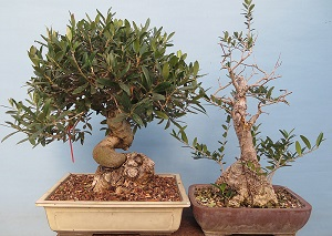 What Should Be In Your Bonsai Soil Bonsai Tree Care Information