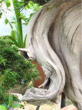 Preserving deadwood image 3