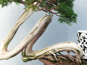 preserving deadwood image 4